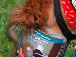 Webinar: Ausbildung zum Hundeernährungsberater Block Fertigfutter