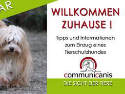 Webinar: Willkommen Zuhause mein Tierschutzhund.