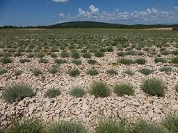 Webinar: Vom Samen zum Siegel