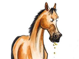 """Webinar: """"Stilles Leid - Magengeschwüre beim Pferd""""- Teil 2"""