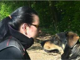 Webinar: Leben unter Hunden