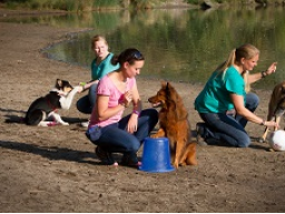 Webinar: Crossdogging für Hundetrainer - Optimierung der Crossdoggingstunde