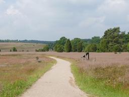 Webinar: Erlebnis Lüneburger Heide