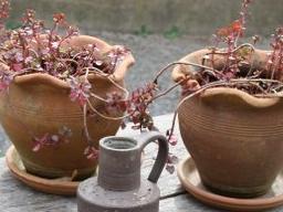 Webinar: Pflanzen zwischen gut und böse 1. Teil