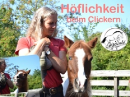 Webinar: Höflichkeit beim Clickern