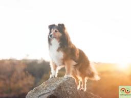 Webinar: Tiergesundheit