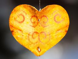 Webinar: Eine glückliche Liebesbeziehung: Wie geht das?