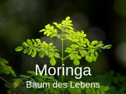 Webinar: Moringa - Baum des Lebens