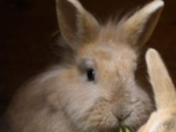 Webinar: Wildkräuter i.d.Ernährung von Kaninchen, Meerschweinchen und Chinchilla