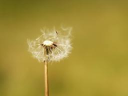 Webinar: Von Luftschlössern und Tagträumen