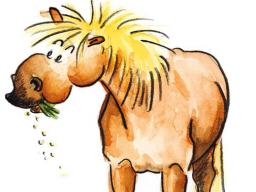 """Webinar: Nährstofflehre in der Pferdefütterung: """"Was braucht Purzel?"""" - Teil 2"""