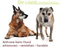 Webinar: Endstation Arthrose - für Hunde