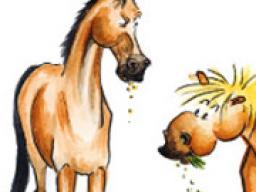 Webinar: Stilles Leid - Magenerkrankungen beim Pferd