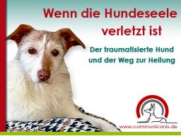 Webinar: Der traumatisierte Hund und der Weg zur Heilung.