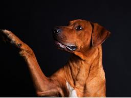 Webinar: Hundesprechstunde