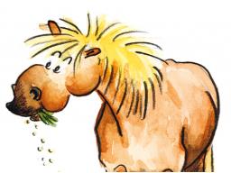 Webinar: Einführung in die Rationsberechnung für Pferde