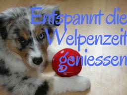 Webinar: Entspannt die Welpenzeit geniessen