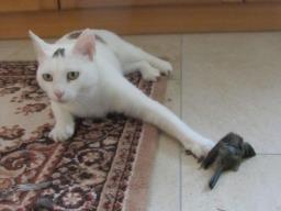 Webinar: Katzenernährung (Zusatz für Hundeernährungsberater)
