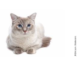 Webinar: Meine Katze ist überängstlich