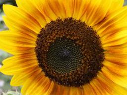 Webinar: Vitamin D - Sprechstunde