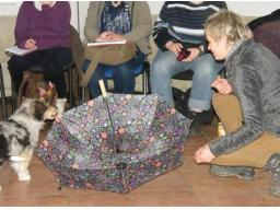 Webinar: Hundeauswahl bei Assistenzhunden