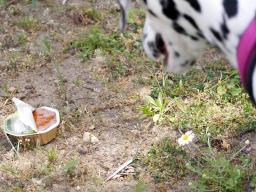 Webinar: Tipps zur Giftköder Prävention für deinen Hund
