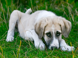 Durchfall - wie helfe ich meinem Hund?