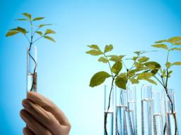 Webinar: Grundlagen der natürlichen Hormontherapie Teil II