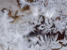 Webinar: Der Winter im Koiteich und seine Herausforderungen