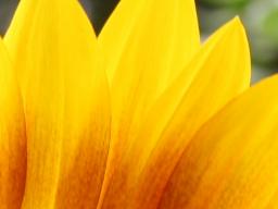 Webinar: Sonne + Wohlbefinden
