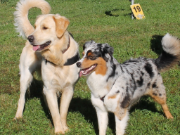 Webinar: Offene Fragestunde für Hundehalter