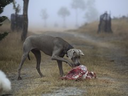 Webinar: Hunde Barfen