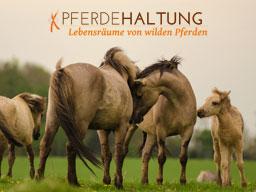 Webinar: Pferdehaltung