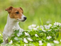 Webinar: Homöopathie für Hunde