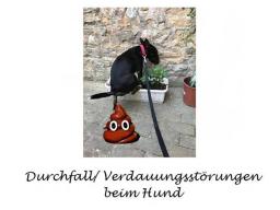 Webinar: Durchfall/ Verdauungsstörungen beim Hund