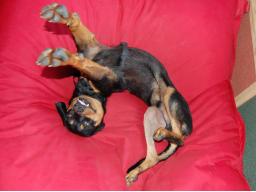Webinar: Basiskurs Hundemassage - ein interaktives Webinar