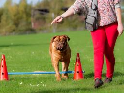 Webinar: Crossdogging Einsteigerseminar für Hundetrainer