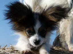 Webinar: Die 10 besten Tipps für dein Hundetraining