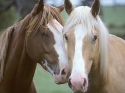 Webinar: Basics Blockkurs Pferdeakupunkturpunkte für Tierbesitzer