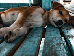 Webinar: Ernährung und ihre Folgen für die Haustiere