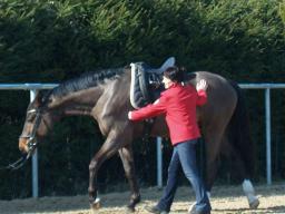 Webinar: Der elastische Pferderücken