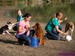 Webinar: Neukunden fürs Crossdogging gewinnen
