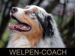Webinar: Hunde und ihr Individualabstand