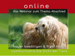 Webinar: Abschied aus tierischer Sicht