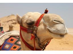 Webinar: Ein Verliebter sieht die Blume mit anderen Augen als ein Kamel