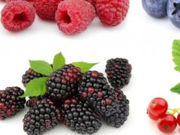 Webinar: Sekundäre und primäre Pflanzenstoffe