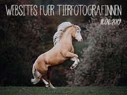 Webinar: Wordpress für Tierfotograf*innen