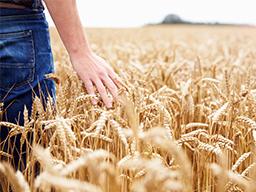Webinar: Akquise + Farming