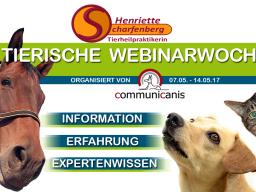 Webinar: Ein Einblick in die klassische Tierhomöopathie | Referentin Henriette Scharfenberg