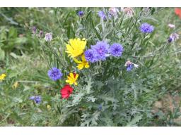 Webinar: Sekundäre Pflanzenstoffe